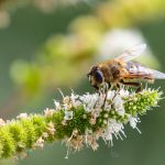 Larkfleet Group to host online conference on housebuilding and carbon biodiversity
